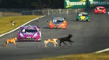 Stock: cachorros invadem Stock Car em Curitiba!